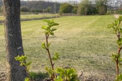 Sträucher und Rasen auf neuen Standplätzen