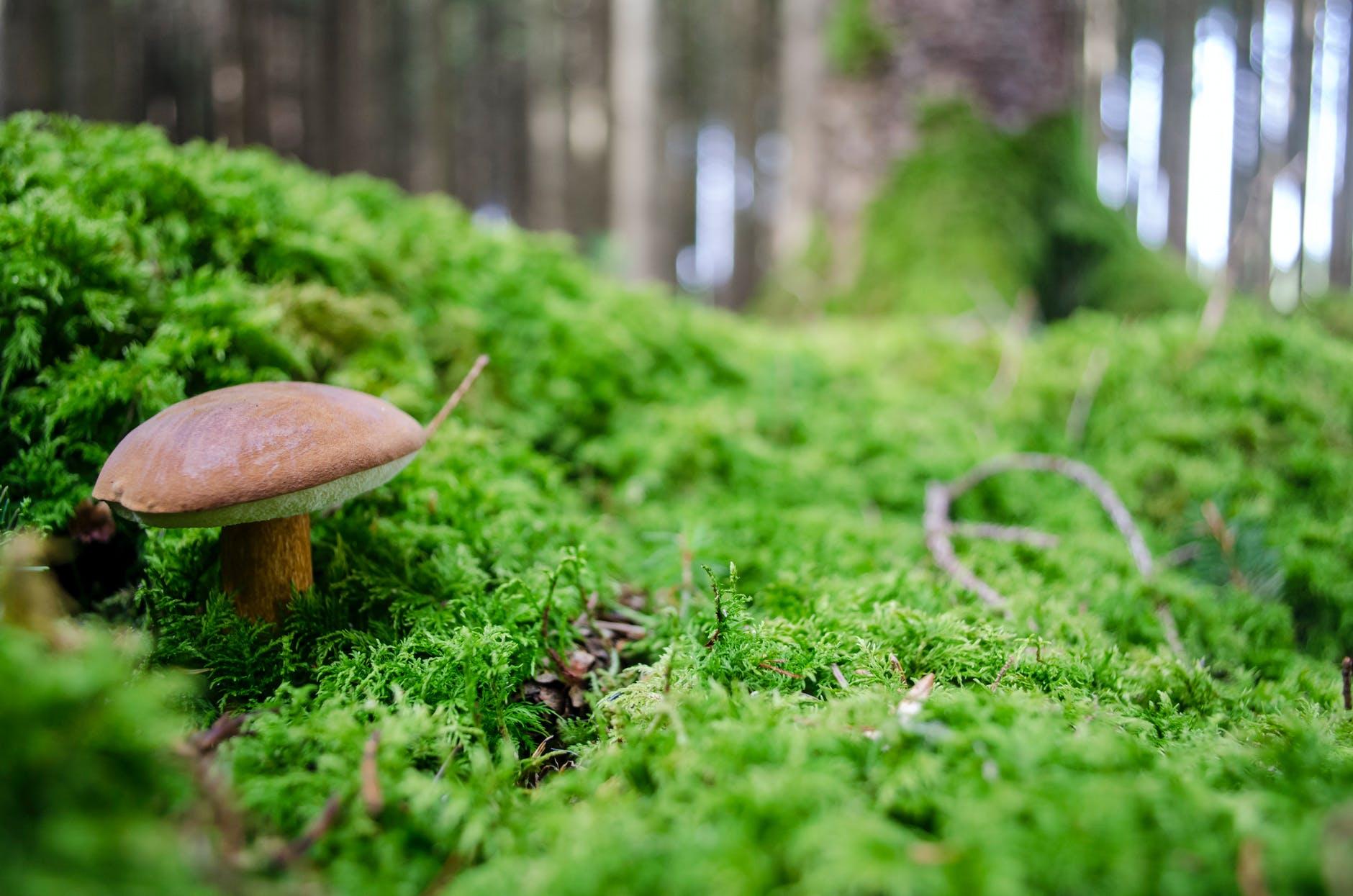 food wood summer grass